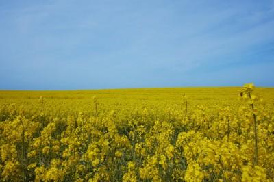 terrain en campagne Vendée