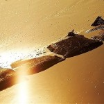 Le bassin ostreicole Talmont